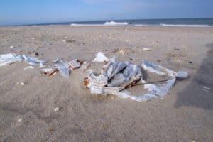 Should The Wildwoods Go Plastic-less?