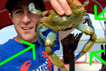 Crabbing In The Wildwoods