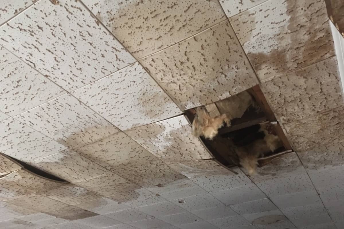 Help Save The Wildwood Historical Society's Roof