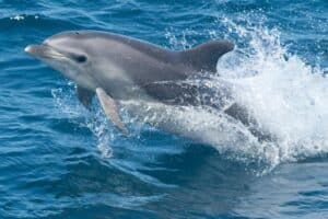 Why You See So Many Dolphins At The Jersey Shore