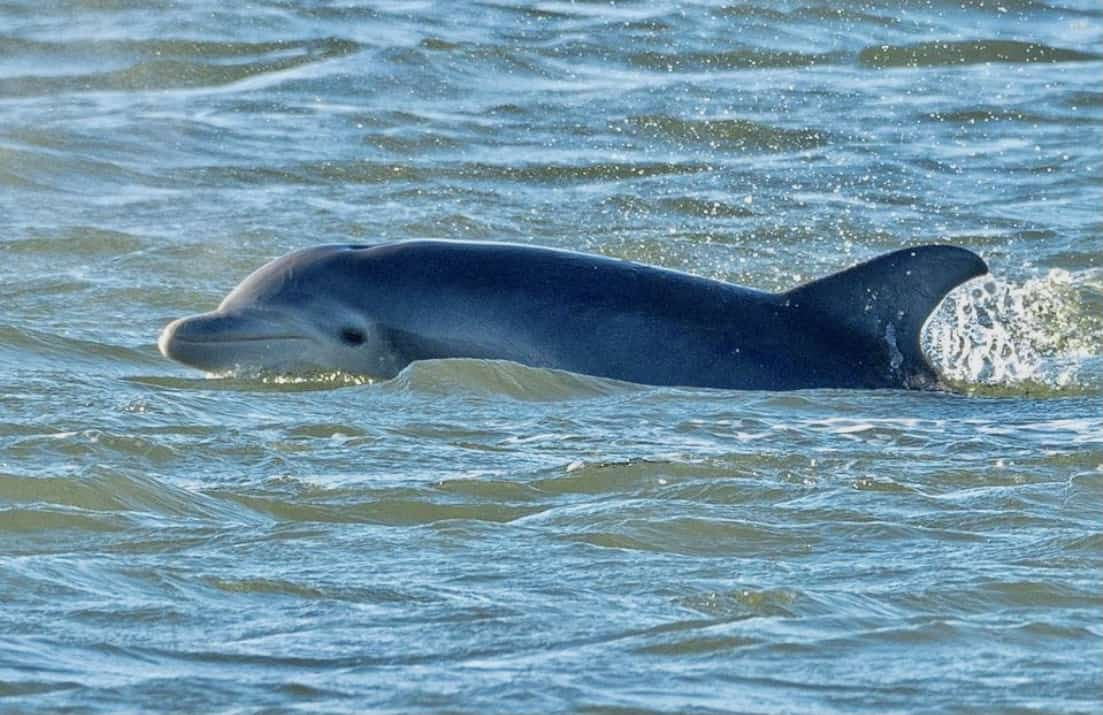 Where do the Cape May Dolphins Go In The Winter