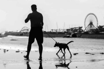 """Explaining N. Wildwood's NEW """"Dogs On The Beach"""" Rule"""