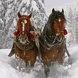 GOLDEN HORSESHOE SLEIGH RIDES