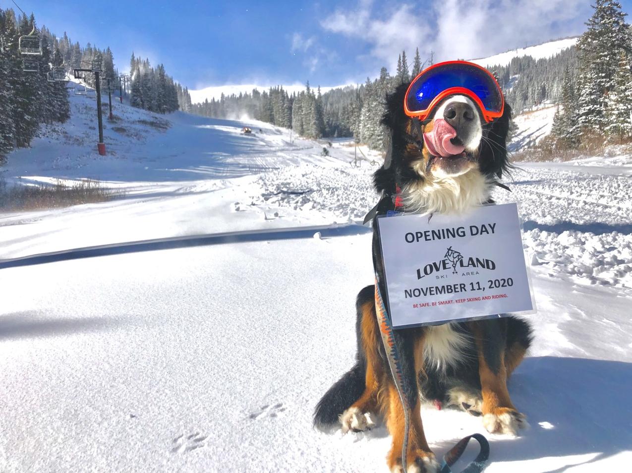 Loveland-Official-Snow-Dog