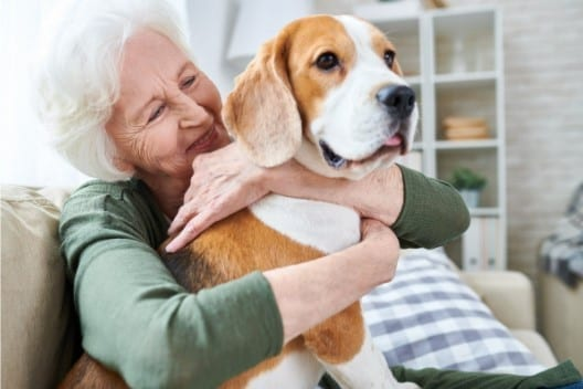 what happens to pets when you die