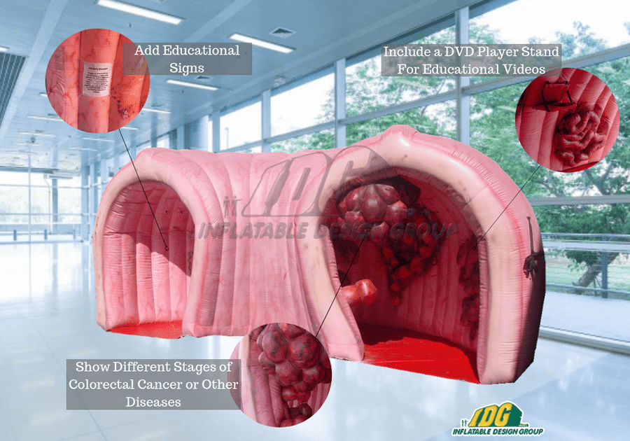 An Inflatable Colon Makes Information Easier to Digest 3