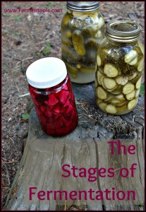 stages of fermentation | fermentools
