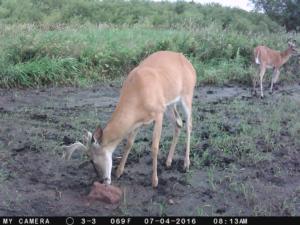 Trail Cam Picture 4