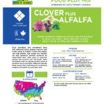 Crush Clover Alfalfa Back