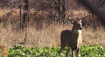 Deer Food Plot Blog