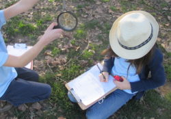 field study, observation, magnifying glass, nature, Nature Detectives, outside, science, evidence