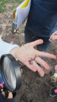 worms, outside, nature, field study, magnifying glass