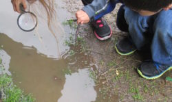 mud, mud puddles, swim, rain, rainstorm, search, curious, magnifying glass, look, investigate, poke