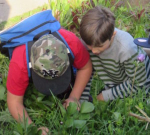 garden, insects, grass, Nature Detectives, outdoors, curious