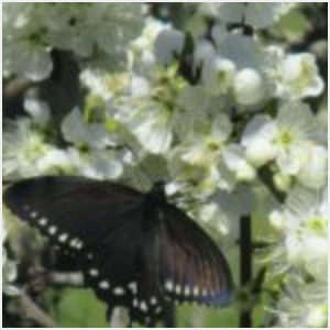 butterfly, spring, pollination, rebirth