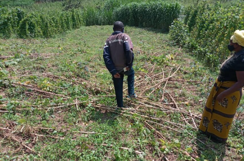 Rubavu: Agatsiko kiyise 'Aba-rayon' kahawe igihe gito ikibazo cyako kikajya ku ruhande