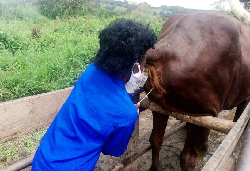 Huye: Abavuzi b'amatungo basabwe gukora kinyamwuga