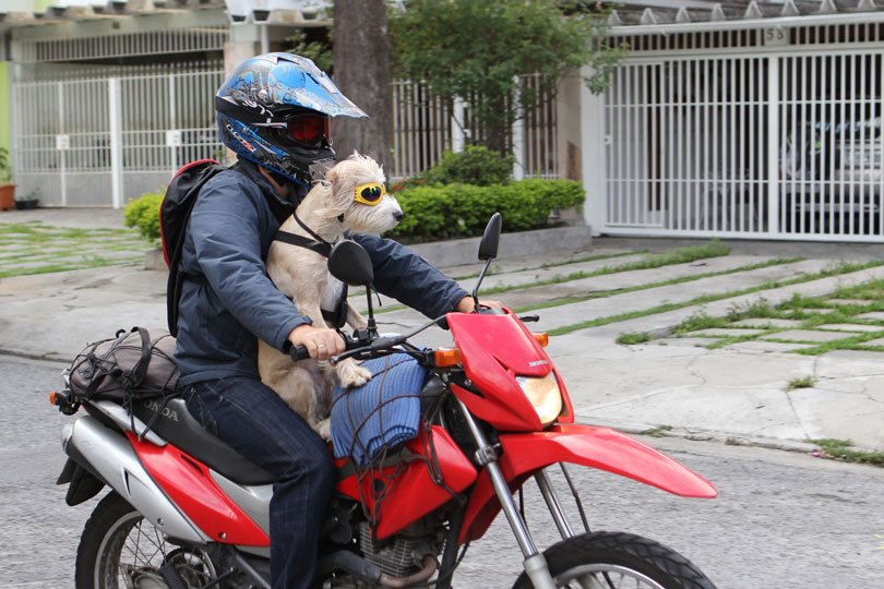 iphoto-como-fiz-a-foto-simba-cachorro-motoqueiro-1