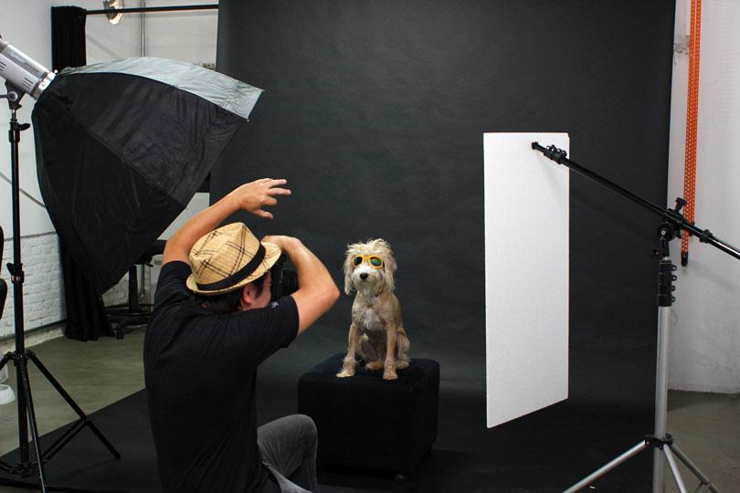 iphoto-como-fiz-a-foto-simba-cachorro-motoqueiro-6
