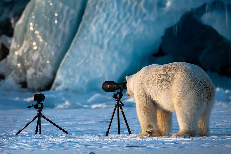 fotos animais engraçadas comedy wildlife