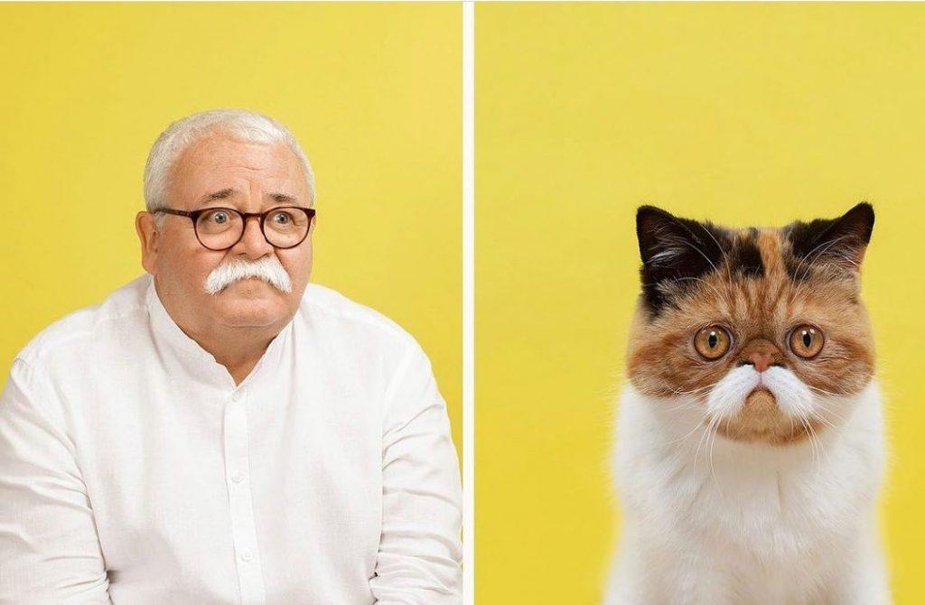 Gatos são parecidos com humanos