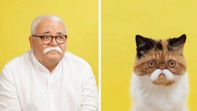 gatos parecidos com humanos