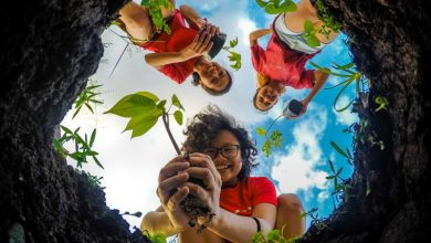 concurso de fotografia de natureza para fotógrafos amadores