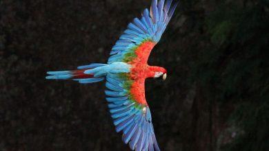 concurso de fotografia de natureza - arara vermelha