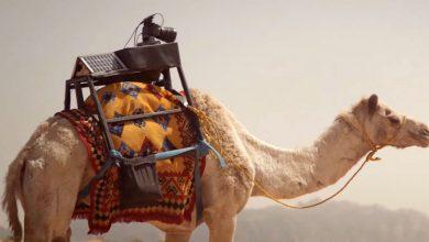 camela é primeira assistente de fotógrafo do mundo
