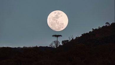 Fayson Merege - Foto da Lua e a Araucária