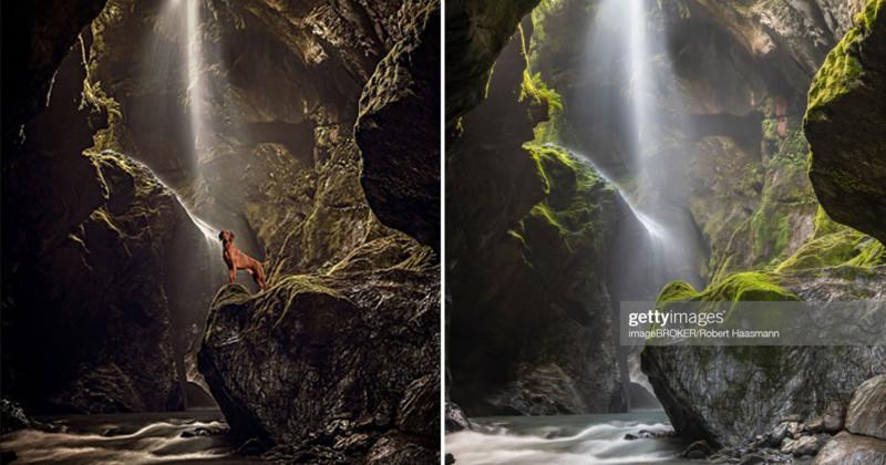Fotógrafo de animais de estimação ganhou vários concursos com montagens usando fotos de outras pessoas