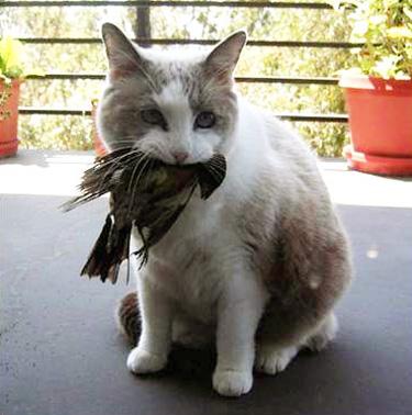 catwithbirdfull