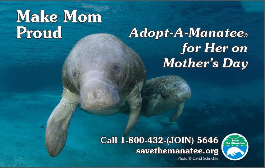 adoptM