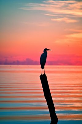 SAVE THE DATE: Get Wild in the Four Florida Keys National Wildlife Refuges: Second Annual Outdoor Fest Set for March 17th-20th, 2017