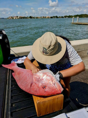 Atlantic Anglers and Captains Encouraged to Assist FWC with Red Snapper Research
