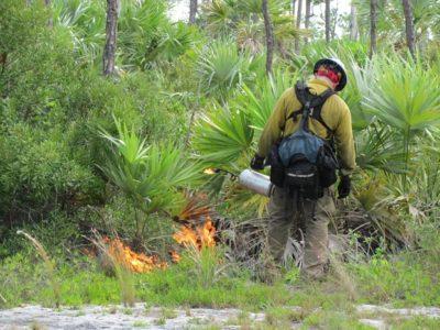 National Key Deer Refuge Upcoming Prepwork for Start of 2017 Prescribed Burn Season