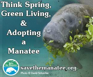 Hop To It! Adopt a Manatee for Easter!