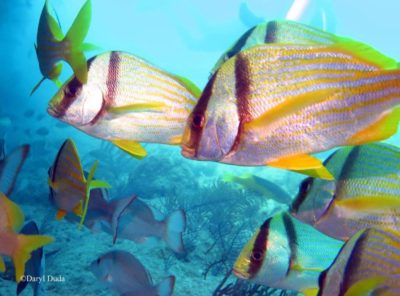 """""""Marine Zoning Works for Me"""" Offers Presentations on the Benefits of Marine Zoning in the Florida Keys National Marine Sanctuary"""
