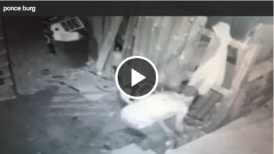 Detective Asks for Help Identifying Burglary Suspect [surv. video]