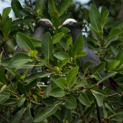 Critter Cam Goes Live in Florida Keys National Wildlife Refuges