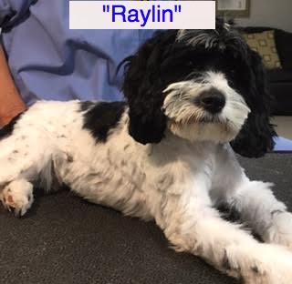 raylon3
