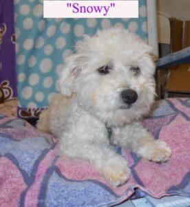 snowyb