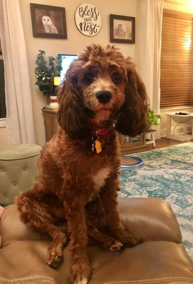 Tabitha's Pup