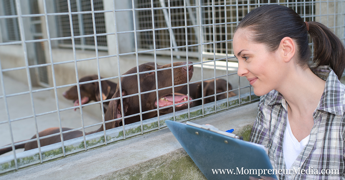 Love Pets? Maybe An Animal Care Career Is For You