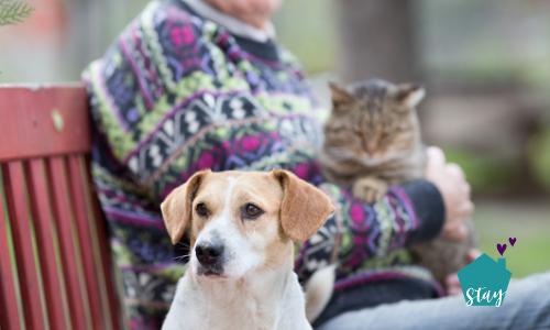 Pets: The Perfect Senior Companion