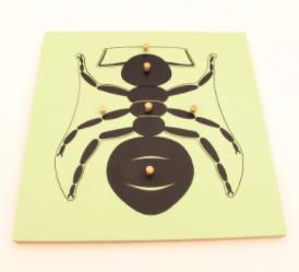 Ant-Puzzle Montessori