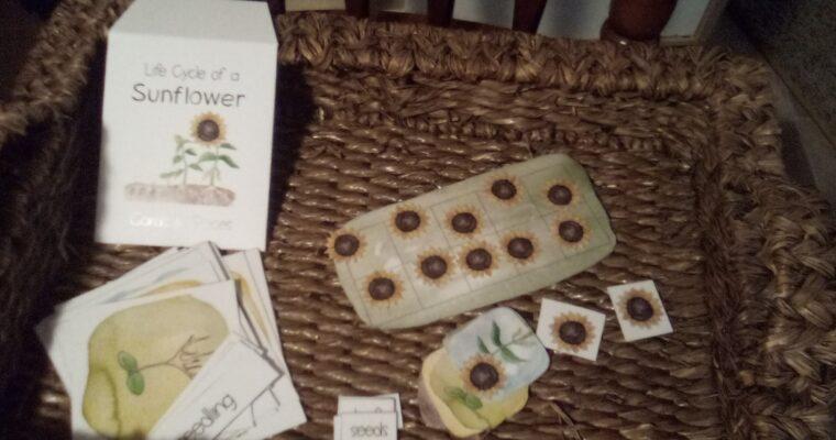 Sunflower Unit