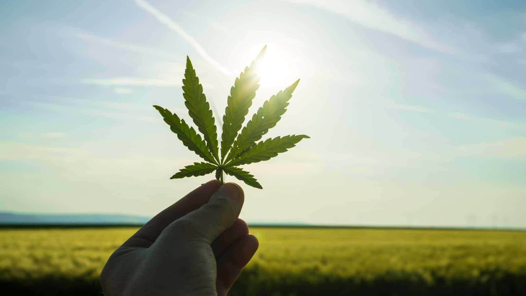 Cultivate Las Vegas Dispensary Study Shows Cannabis is Becoming a Less Divisive Issue in the U.S. Keep out of reach of children. For use only by adults 21 years of age or older.