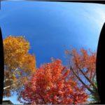 fall foliage sky ceiling
