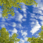 big blue sky with green foliage relaxes the body